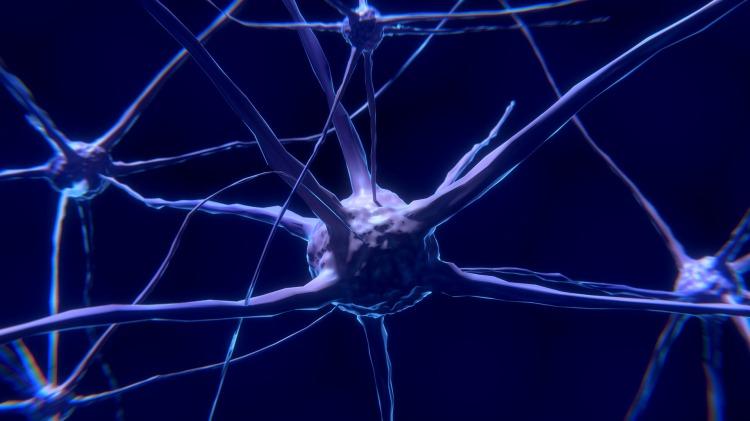 Hallan evidencia del desarrollo de neuronas durante la vejez
