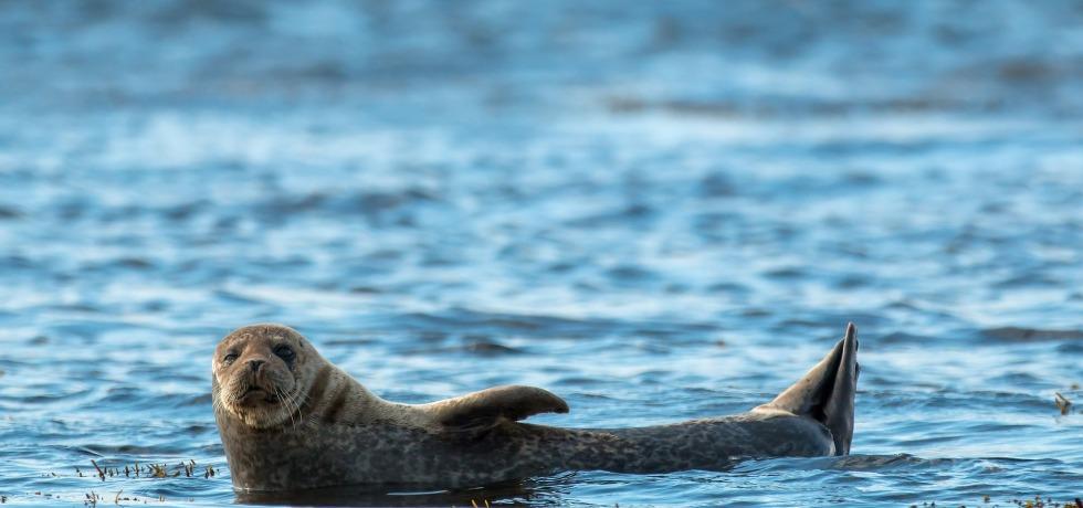 Tómate un respiro y escucha a esta foca que aplaude