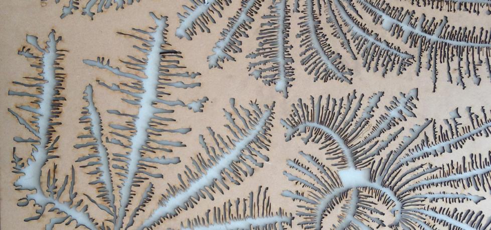 Biologías cotidianas y ciencia local: ocupaciones de la artista Edith Medina